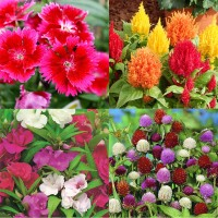 Flower Seeds Combo Pack AG135