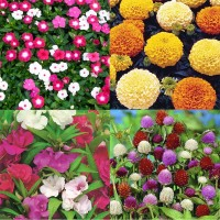 Flower Seeds Combo Pack AG136