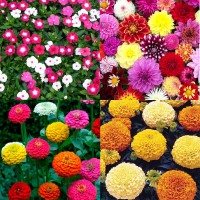 Flower Seeds Combo Pack AG137
