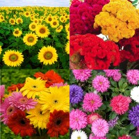 Flower Seeds Combo Pack AG139