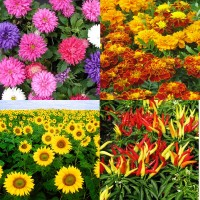 Flower Seeds Combo Pack AG140