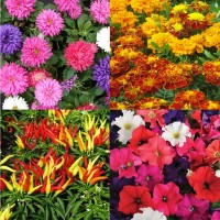 Flower Seeds Combo Pack AG141