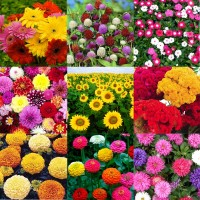 Flower Seeds Combo Pack AG144