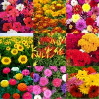 Flower Seeds Combo Pack AG145