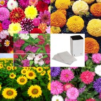 Flower Seeds Combo Value Pack with Grow Bag 12 Pcs