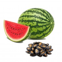 Water Melon F1 Hybrid seeds Kitchen Garden Packet