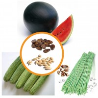 Vegetable Seeds Combo Pack 3 Items AG040