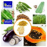 Hybrid Vegetable Seeds Combo Pack 6 Items AG043