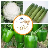 Hybrid Vegetable Seeds Combo Pack 3 Items AG044