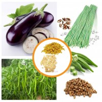 Hybrid Vegetable Seeds Combo Pack 4 Items AG045