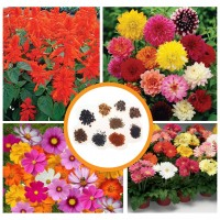 Hybrid Flower Seeds Combo Pack 4 Items AG046