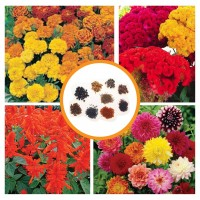 Hybrid Flower Seeds Combo Pack 4 Items AG048