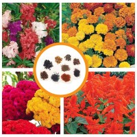 Hybrid Flower Seeds Combo Pack 4 Items AG049