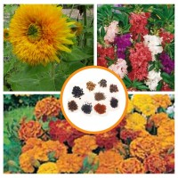 Hybrid Flower Seeds Combo Pack of 3 Items AG050