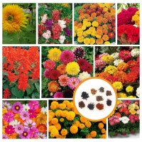 Hybrid Flower Seeds Combo Pack of 10 Items AG051