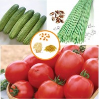 Hybrid Vegetable Seeds Combo Pack AG060