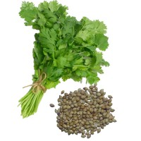 Coriander Hybrid Seeds 3 Packets