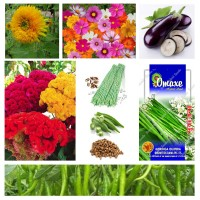 Vegetable and Flower Seeds Combo Pack AG073